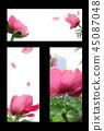 봄 초대장, 봄 프레임, 초대장 백그라운드 45087048