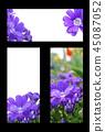 봄 초대장, 봄 프레임, 초대장 백그라운드 45087052