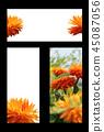 봄 초대장, 봄 프레임, 초대장 백그라운드 45087056