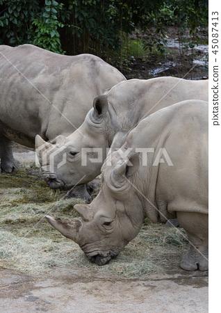 rhinoceros 45087413