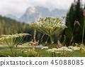 Lago Misurina in the Italian Dolomites 45088085