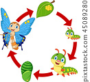 Illustration of butterfly life cycle 45089280