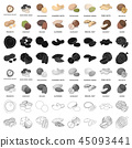 Hazelnut, pistachios, peanuts and other types of nuts.Different types of nuts set collection icons 45093441