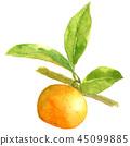 잎 달림, 수채화 물감, 수채화 45099885