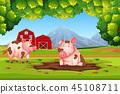 Pig in nature farm 45108711