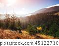 forest autumn season 45122710