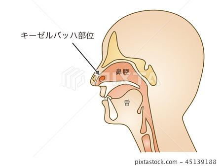 First aid illustration 64: nosebleed 45139188