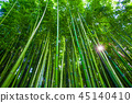 Bamboo forest in Anduze, France 45140410