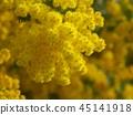 ดอกไม้ฤดูใบไม้ผลิ,ฤดูใบไม้ผลิ,ดอกไม้ 45141918