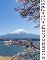 ฟูจิ,ทะเลสาบ,ซากุระ 45147965