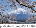 ฟูจิ,ทะเลสาบ,ซากุระ 45147966