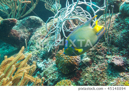 Fishes swimming in the Caribbean Sea of Mexico 45148894