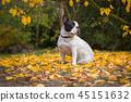 autumn, dog, fall 45151632