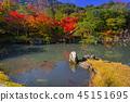 autumn, arashiyama, fall 45151695