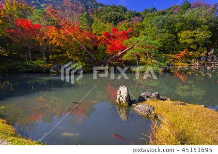 Colorful autumn at the pond near Arashiyama, Japan 45151695