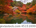 maple, landscape, pond 45151699
