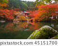 maple, landscape, pond 45151700