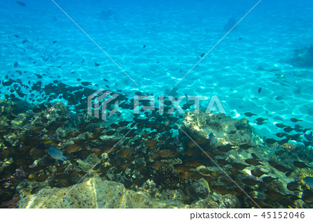 Red Sea underwater with tropical fishes, Egypt 45152046