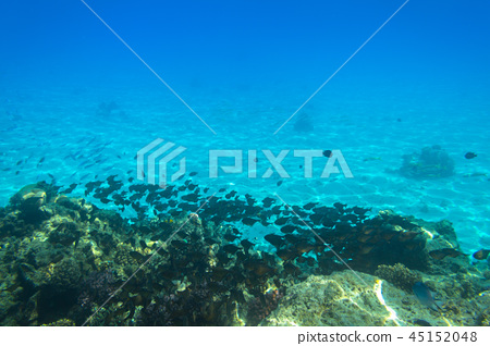 Red Sea underwater with tropical fishes, Egypt 45152048