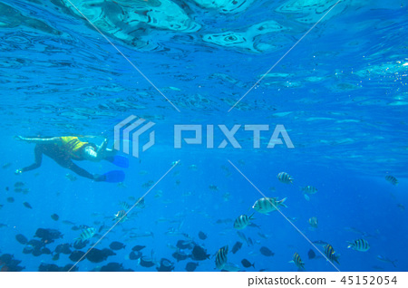 Red Sea underwater with tropical fishes, Egypt 45152054