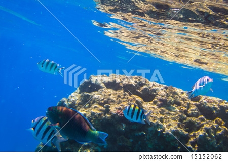 Red Sea underwater with tropical fishes, Egypt 45152062