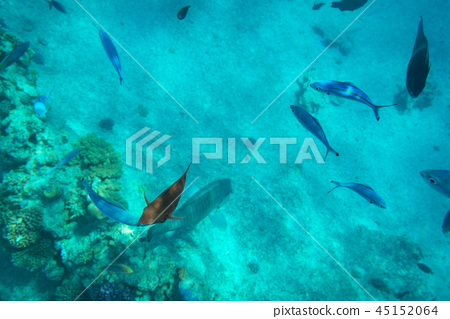 Red Sea underwater with tropical fishes, Egypt 45152064