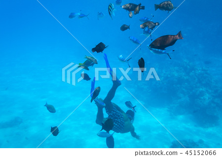 People at snorkeling in Red Sea with fishes, Egypt 45152066