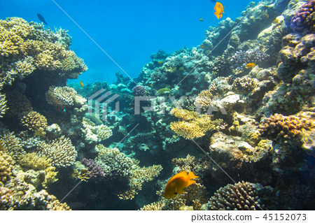 Coral reef of Red Sea with tropical fishes, Egypt 45152073