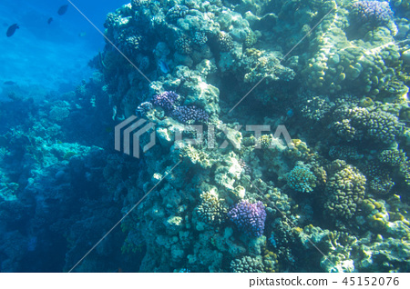 Coral reef of Red Sea with tropical fishes, Egypt 45152076