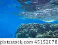Coral reef of Red Sea with tropical fishes, Egypt 45152078