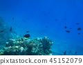 Red Sea underwater with tropical fishes, Egypt 45152079