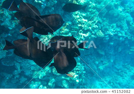 Red Sea underwater with tropical fishes, Egypt 45152082