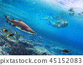 Snorkeling in the water with dangerous shark 45152083