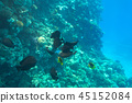 Red Sea underwater with tropical fishes, Egypt 45152084