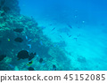 Red Sea underwater with tropical fishes, Egypt 45152085