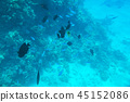 Red Sea underwater with tropical fishes, Egypt 45152086