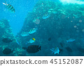 Red Sea underwater with tropical fishes, Egypt 45152087