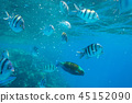 Red Sea underwater with tropical fishes, Egypt 45152090