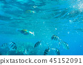Red Sea underwater with tropical fishes, Egypt 45152091