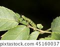 bug, close-up, closeup 45160037