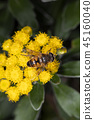 bug, insect, insects 45160040