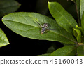 bug, insect, insects 45160043