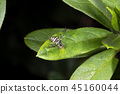 bug, insect, insects 45160044