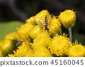 bug, close-up, closeup 45160045