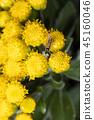 bug, close-up, closeup 45160046