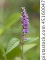 botanic, botanical, wildflower 45160047