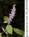 botanic, botanical, wildflower 45160048