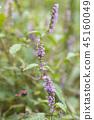 botanic, botanical, wildflower 45160049
