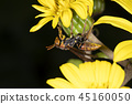 bug, insect, insects 45160050