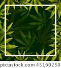 กัญชา,พื้นหลัง,สีเขียว 45160250